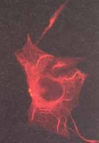 signalverstärkung bei lichtsinneszellen